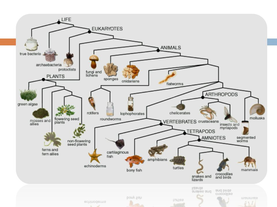 Biochemistry Looking at DNA and RNA of individuals and species gives us biochemical evidence for evolution.