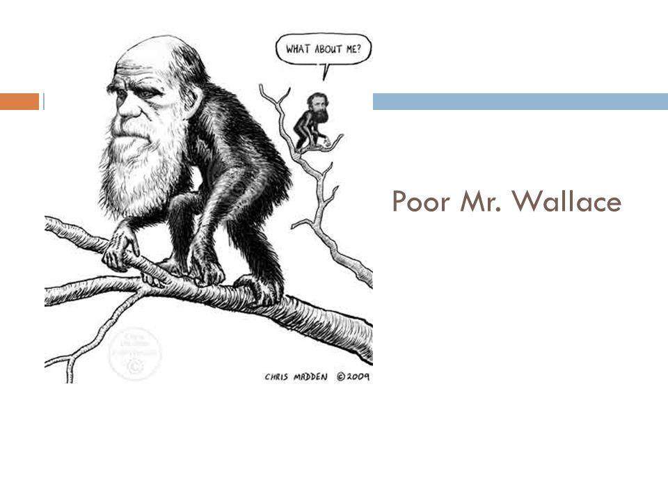 Poor Mr. Wallace