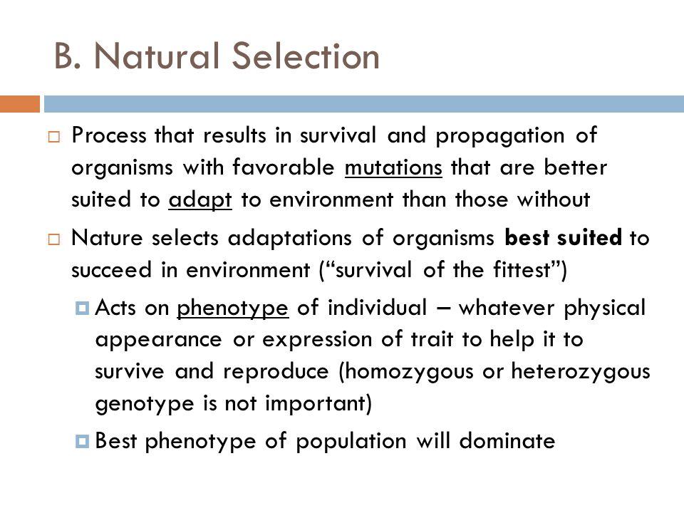 B. Natural Selection