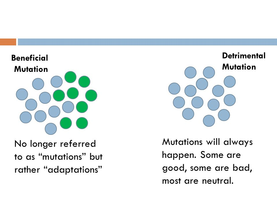 No longer referred to as mutations but rather adaptations
