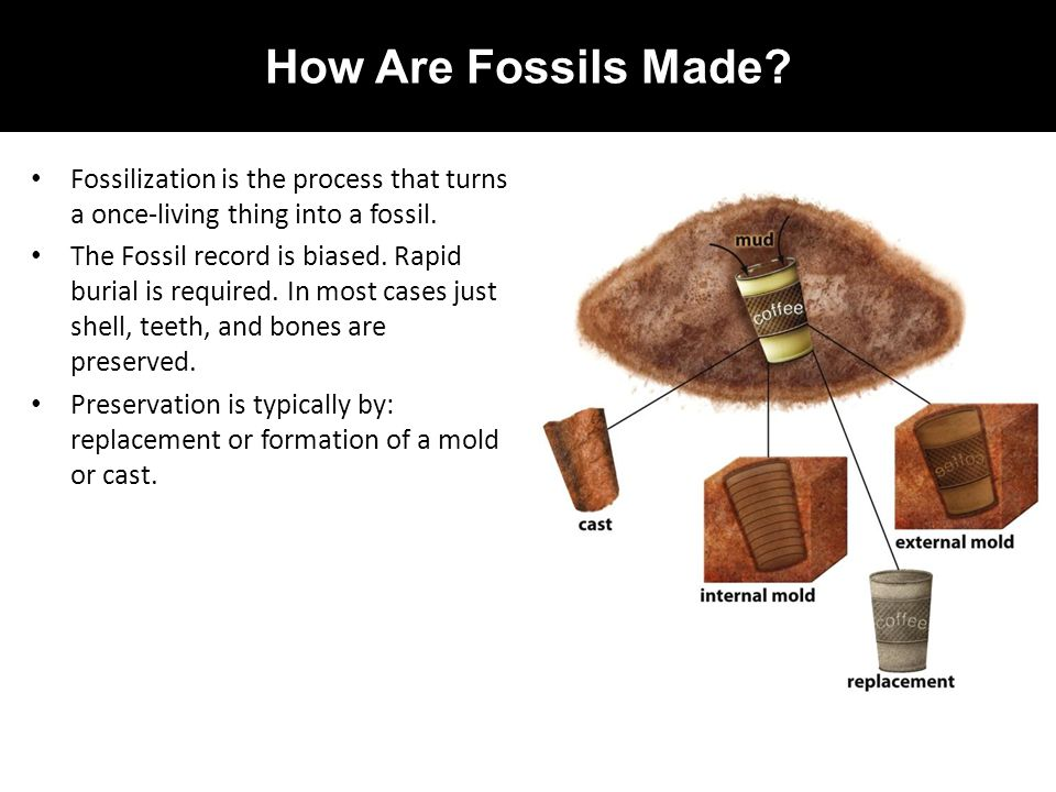 How Are Fossils Made Fossilization is the process that turns a once-living thing into a fossil.