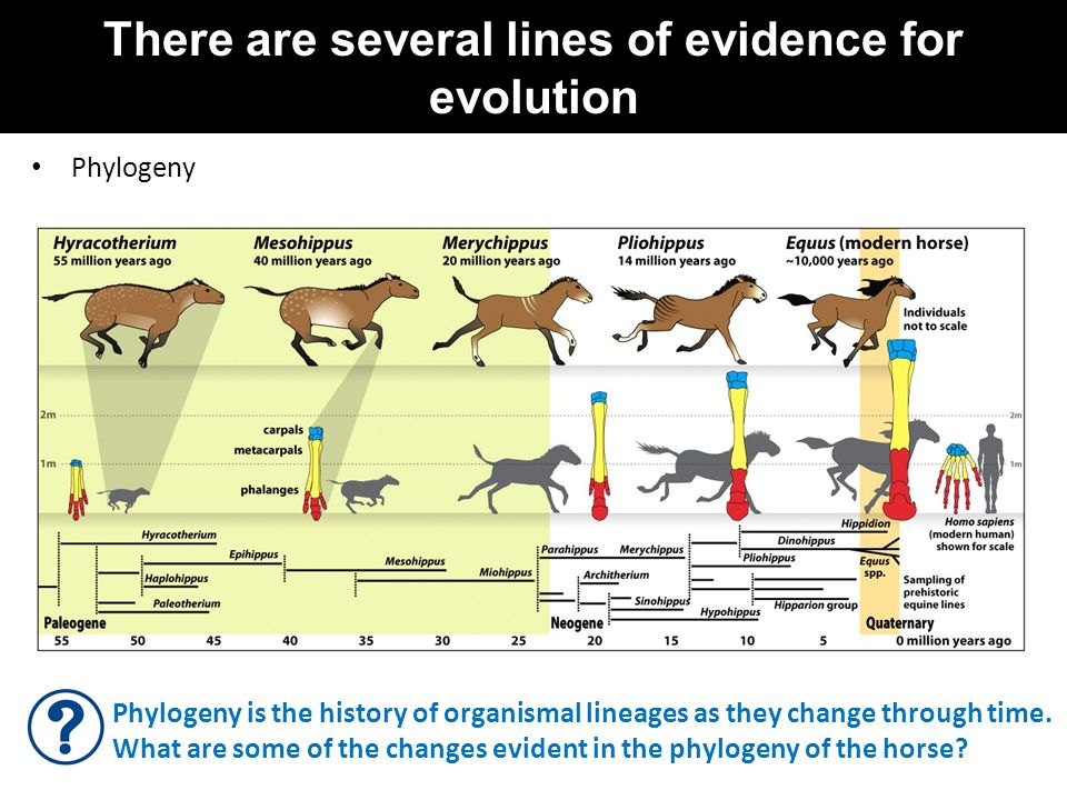 There are several lines of evidence for evolution