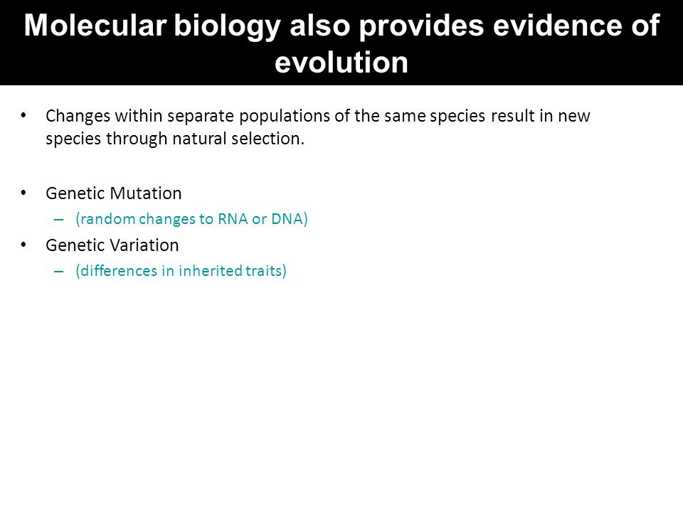 Molecular biology also provides evidence of evolution