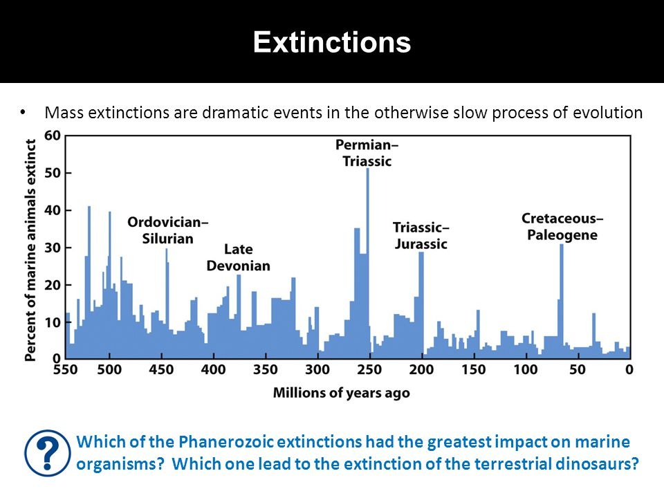 Extinctions Mass extinctions are dramatic events in the otherwise slow process of evolution.
