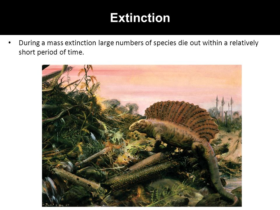 Extinction During a mass extinction large numbers of species die out within a relatively short period of time.