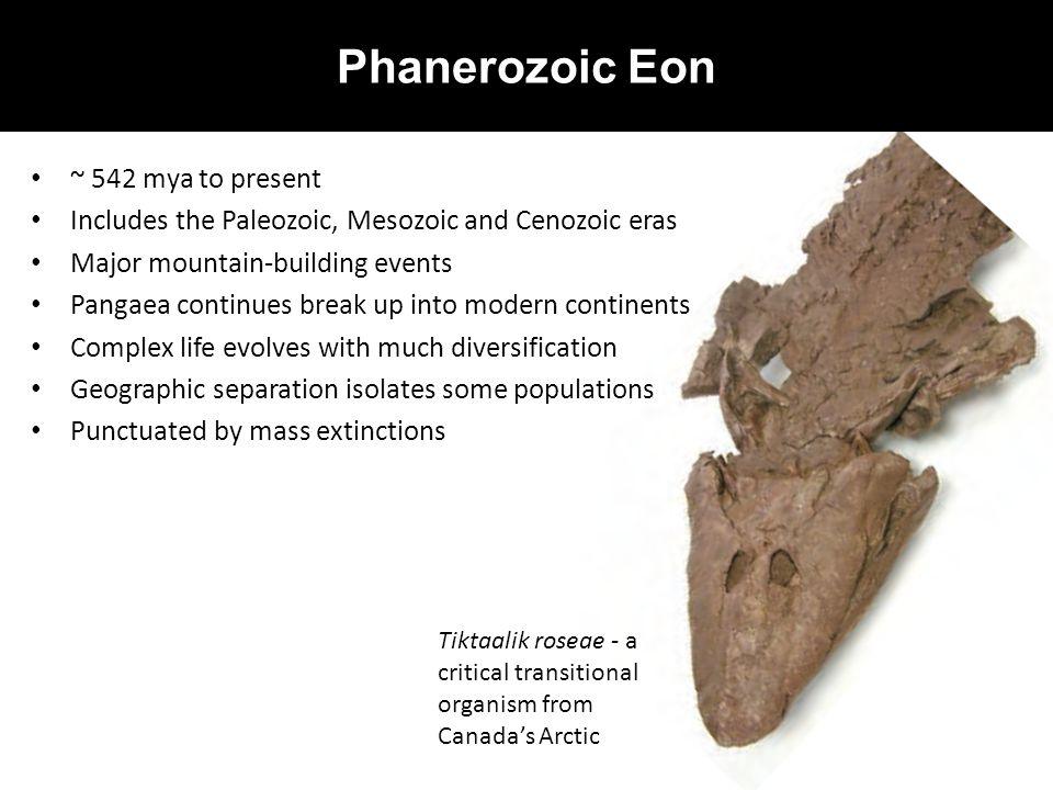 Phanerozoic Eon ~ 542 mya to present