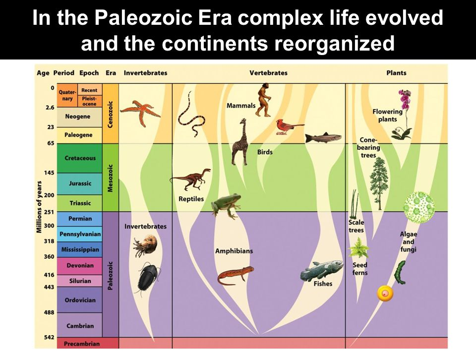 In the Paleozoic Era complex life evolved and the continents reorganized