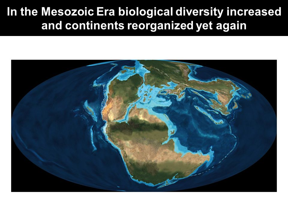 In the Mesozoic Era biological diversity increased and continents reorganized yet again