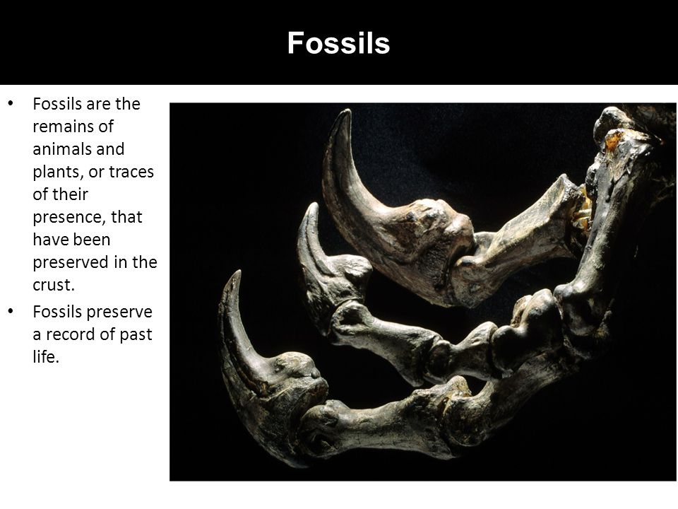 Fossils Fossils are the remains of animals and plants, or traces of their presence, that have been preserved in the crust.