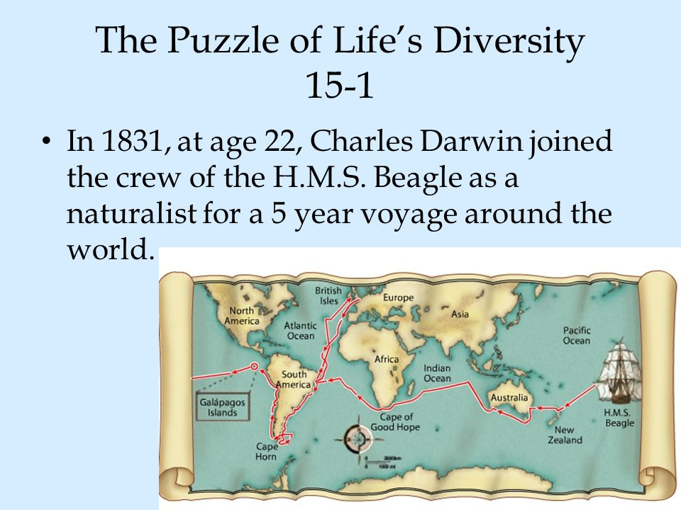 The Puzzle of Life's Diversity 15-1
