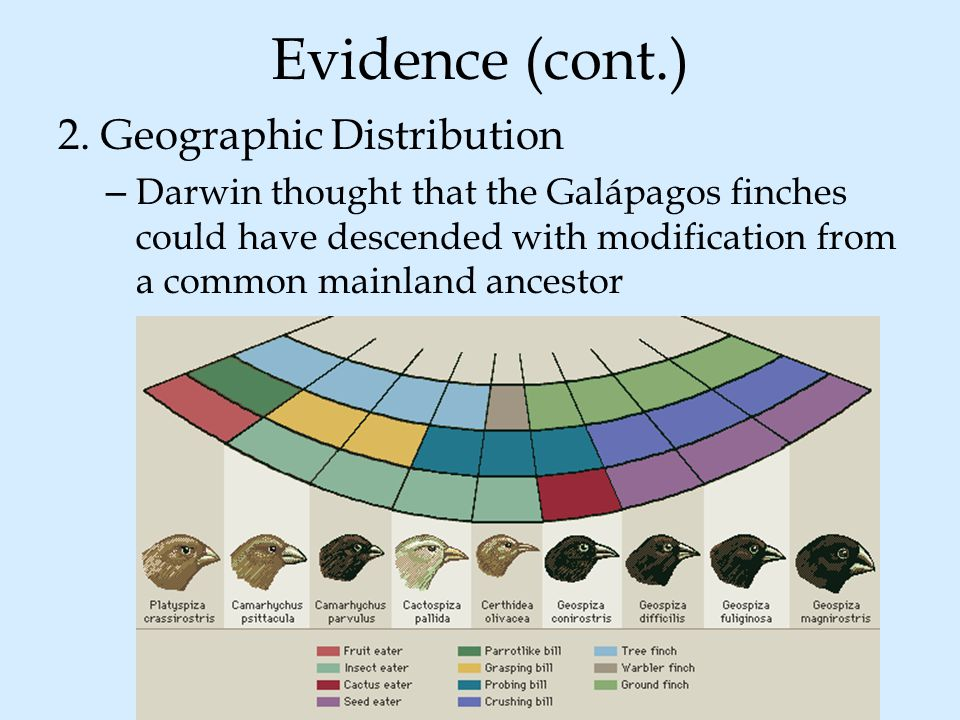 Evidence (cont.) 2. Geographic Distribution