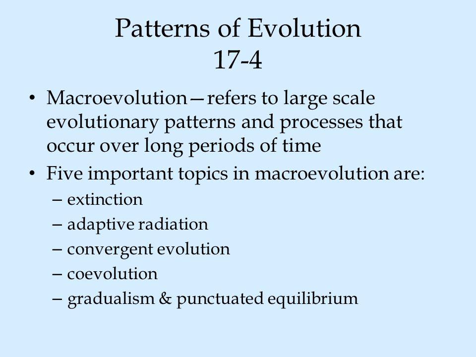 Patterns of Evolution 17-4