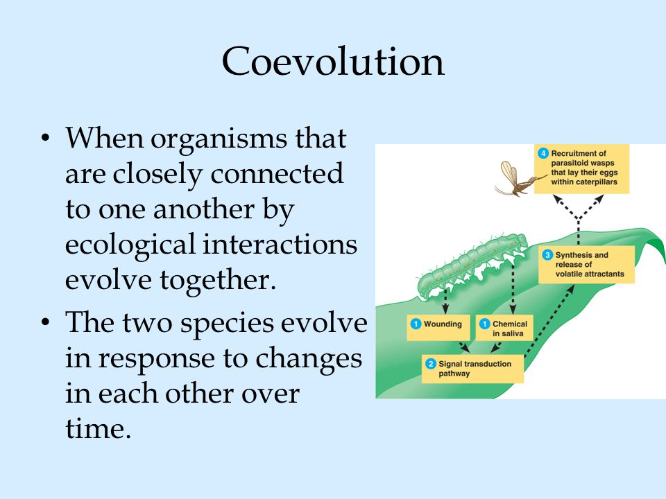 Coevolution When organisms that are closely connected to one another by ecological interactions evolve together.