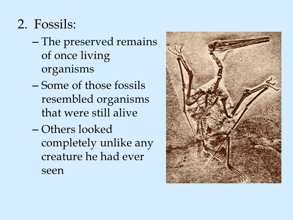 Fossils: The preserved remains of once living organisms