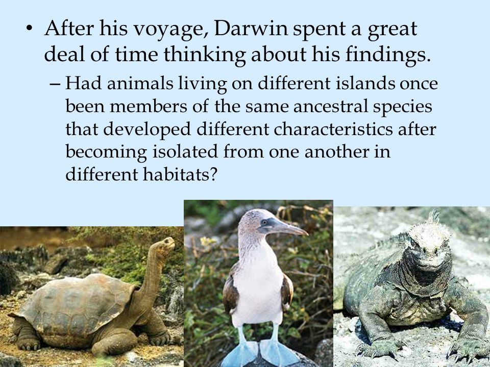 After his voyage, Darwin spent a great deal of time thinking about his findings.