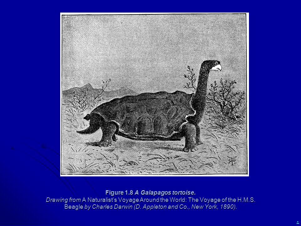 Figure 1. 8 A Galapagos tortoise