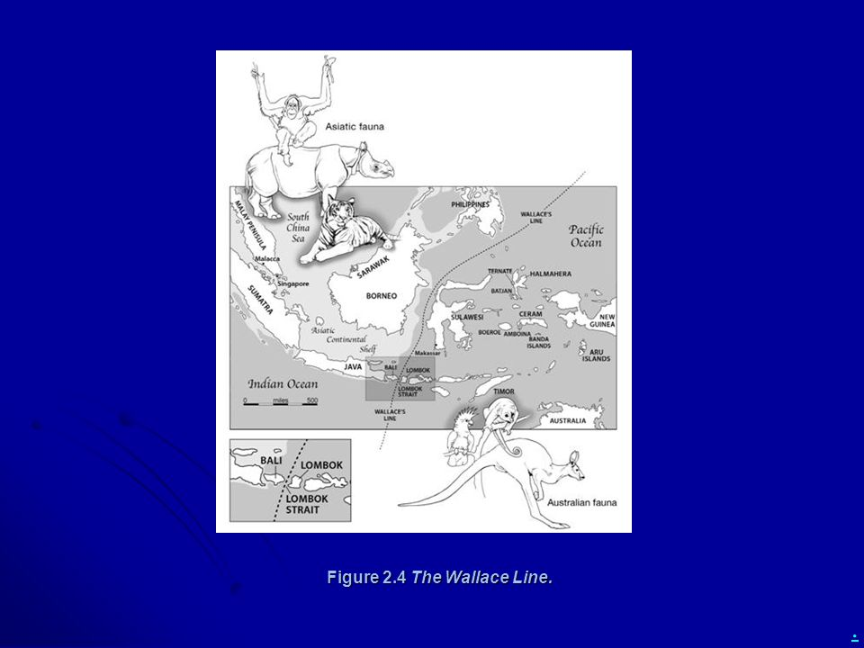 Figure 2.4 The Wallace Line.