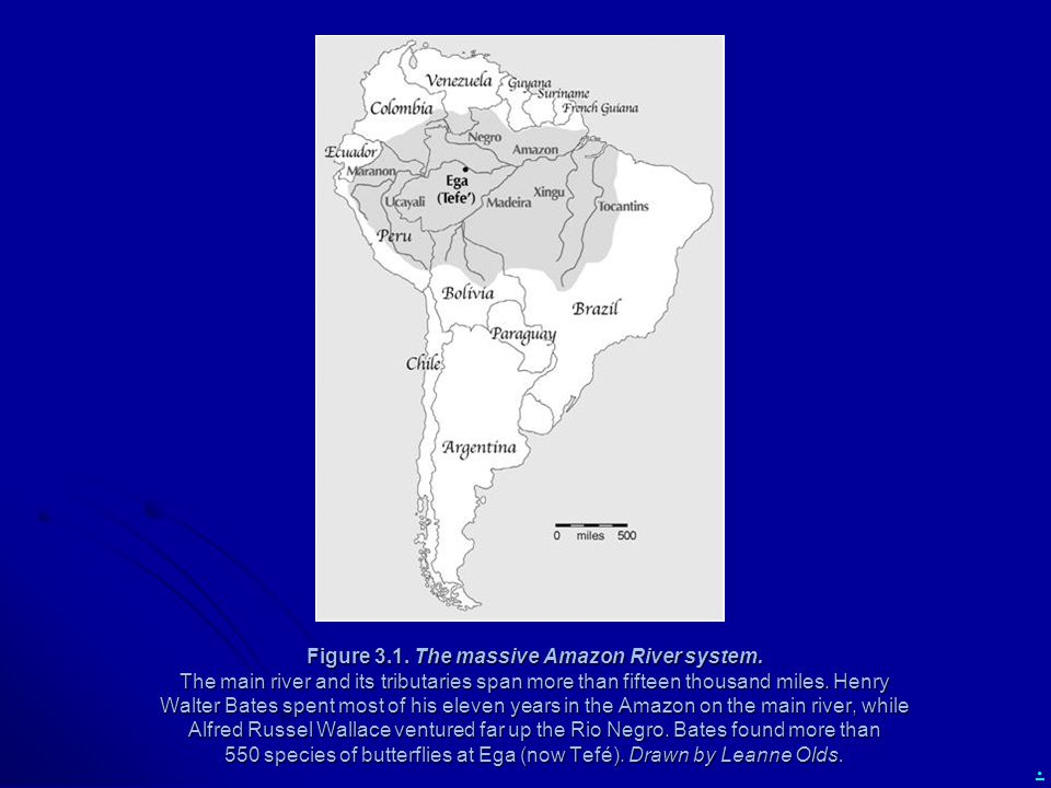 Figure 3. 1. The massive Amazon River system