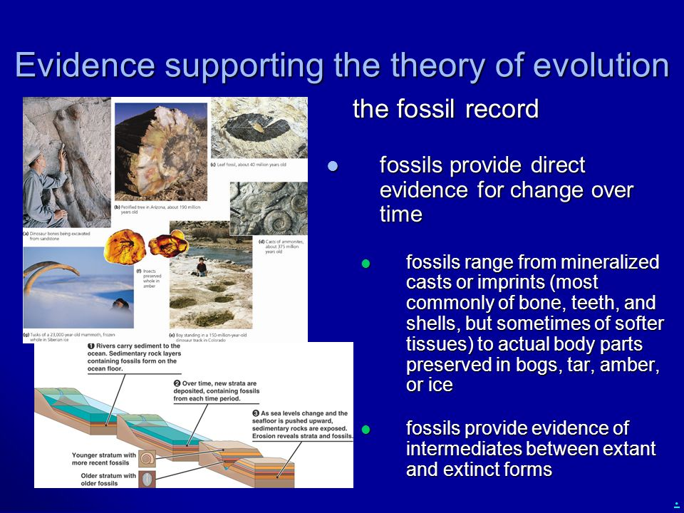 Evidence supporting the theory of evolution