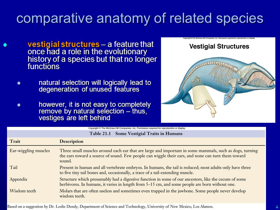 comparative anatomy of related species