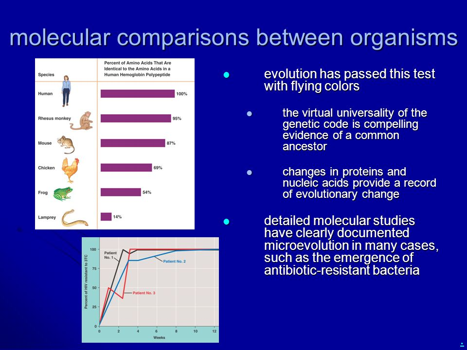 molecular comparisons between organisms