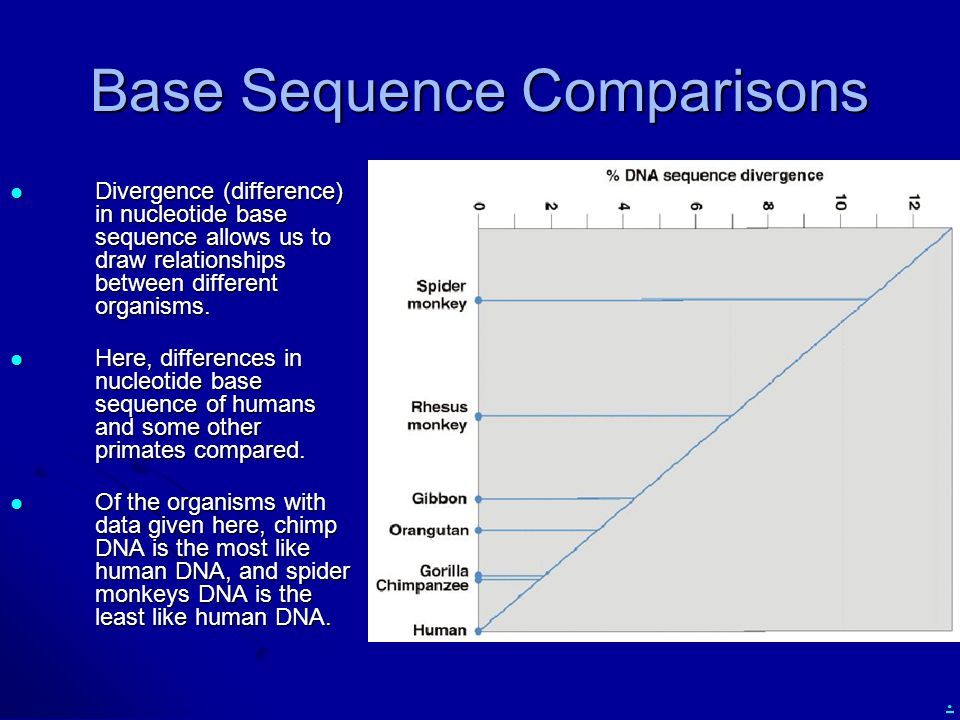 Base Sequence Comparisons