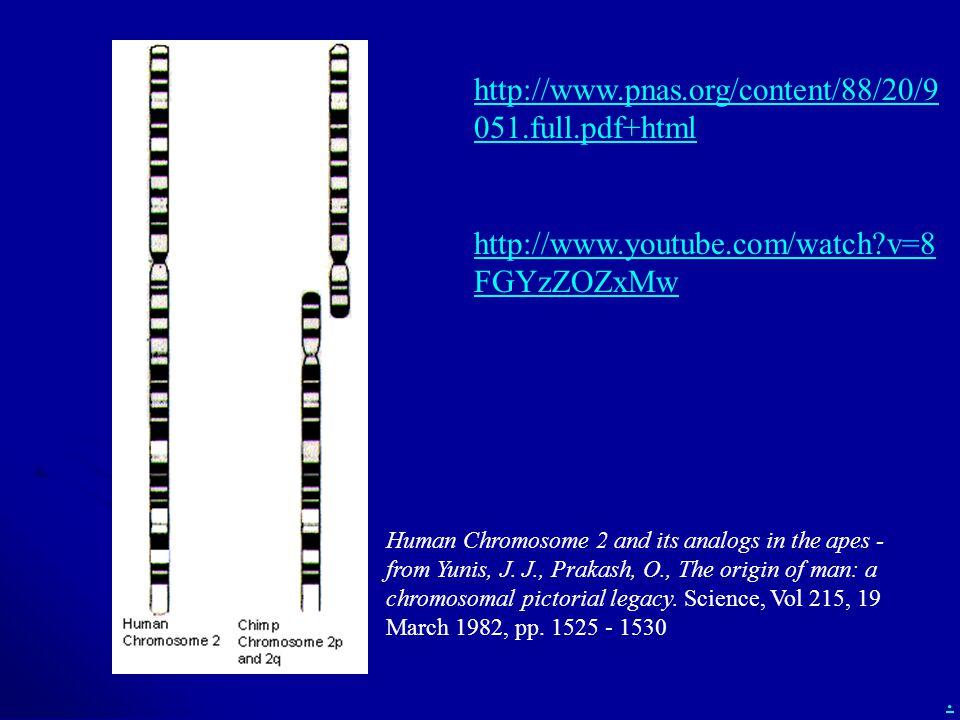 http://www.pnas.org/content/88/20/9051.full.pdf+html http://www.youtube.com/watch v=8FGYzZOZxMw.