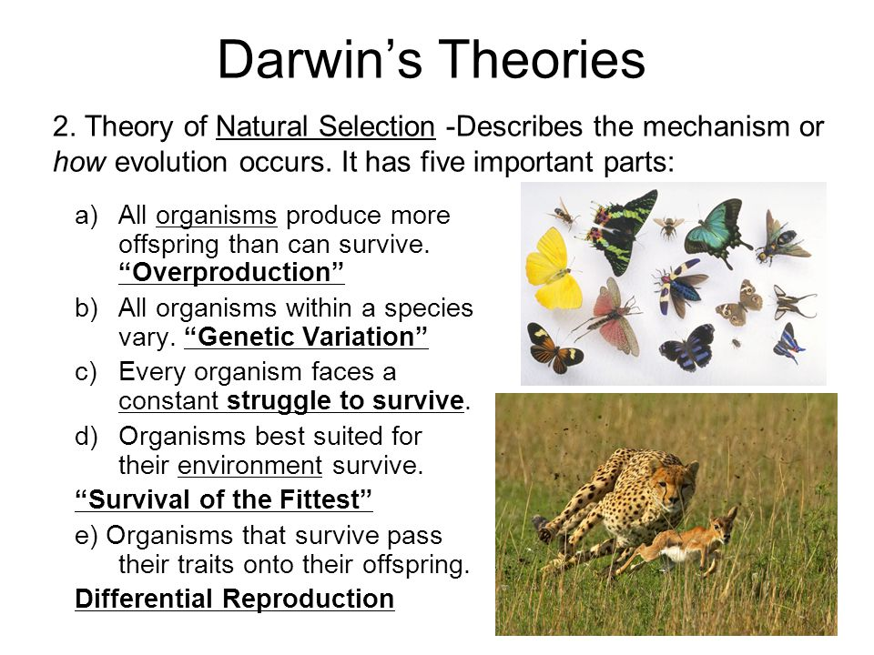 Darwin's Theories 2. Theory of Natural Selection -Describes the mechanism or how evolution occurs. It has five important parts: