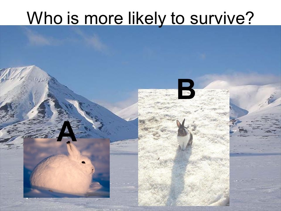 Who is more likely to survive