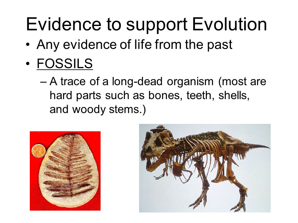 Evidence to support Evolution