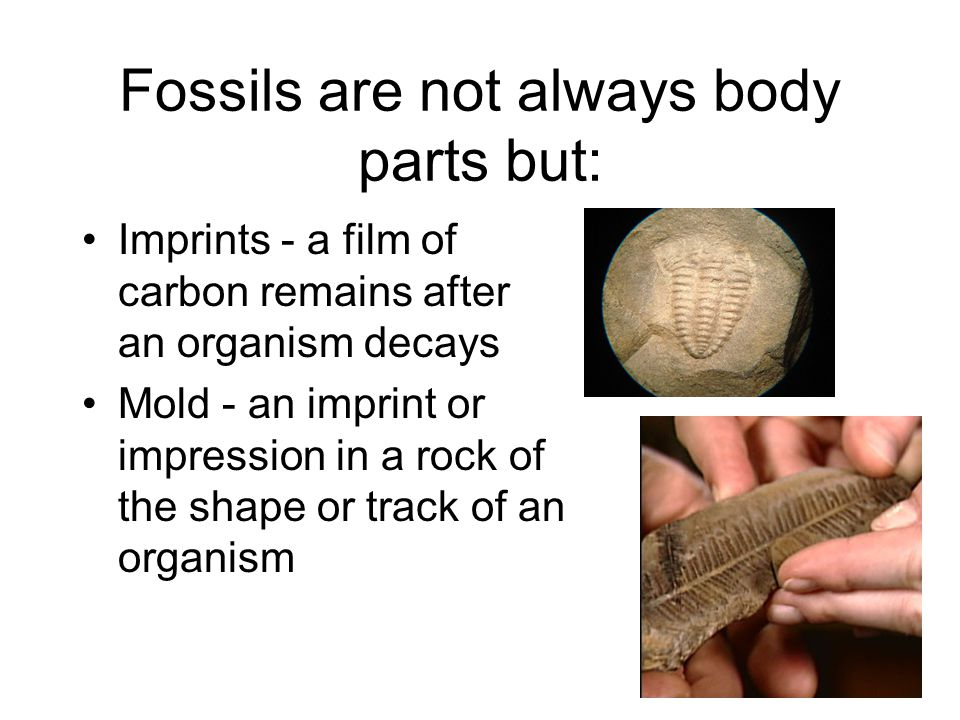Fossils are not always body parts but:
