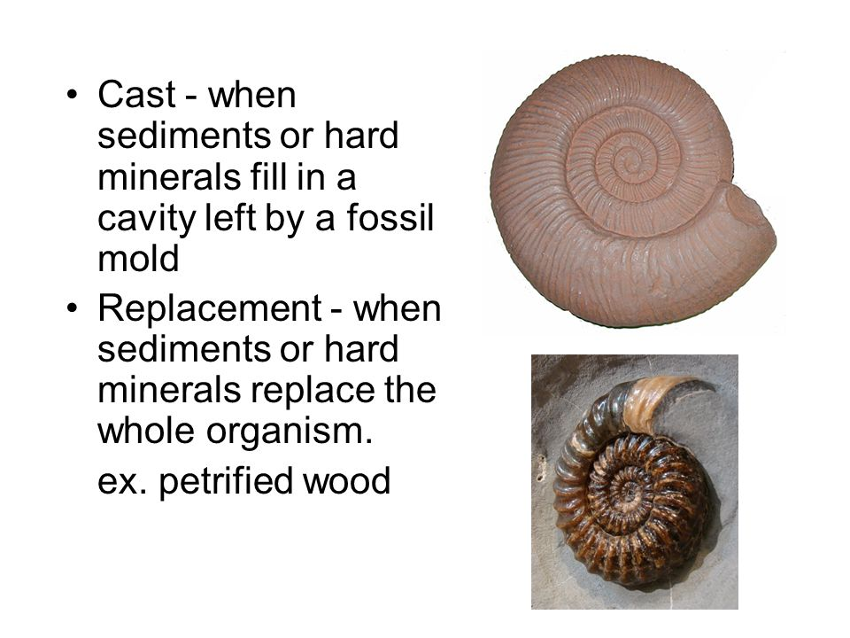Cast - when sediments or hard minerals fill in a cavity left by a fossil mold