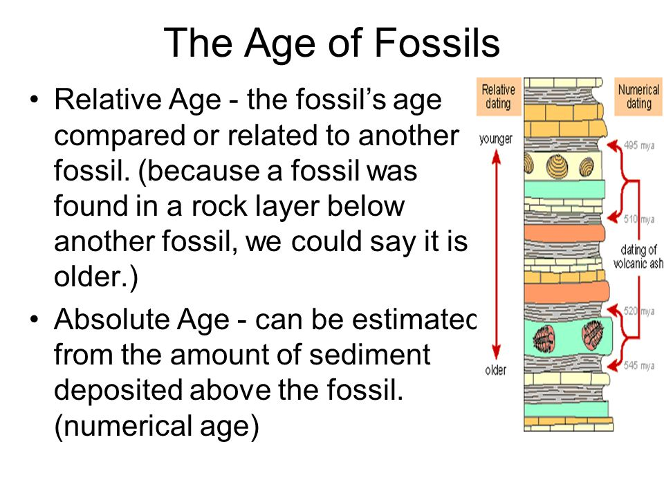 The Age of Fossils