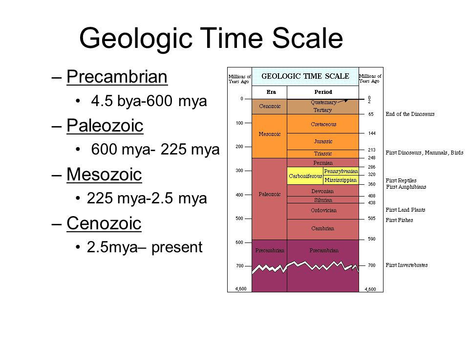 Geologic Time Scale Precambrian Paleozoic Mesozoic Cenozoic