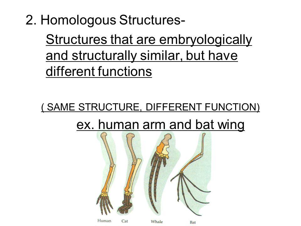 2. Homologous Structures-