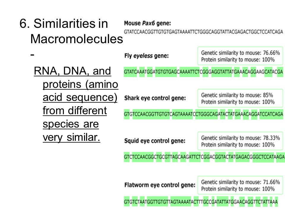 6. Similarities in Macromolecules-