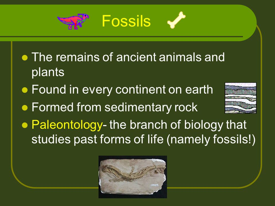 Fossils The remains of ancient animals and plants