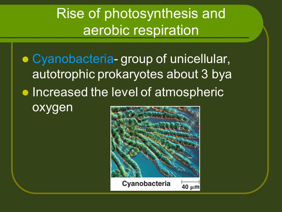 Rise of photosynthesis and aerobic respiration