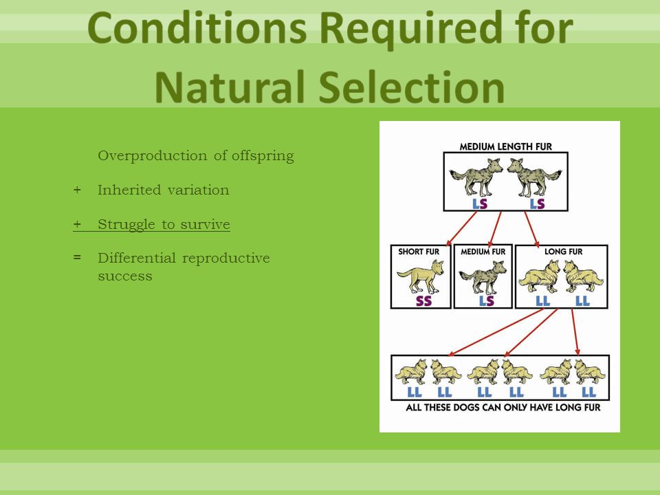 Conditions Required for Natural Selection