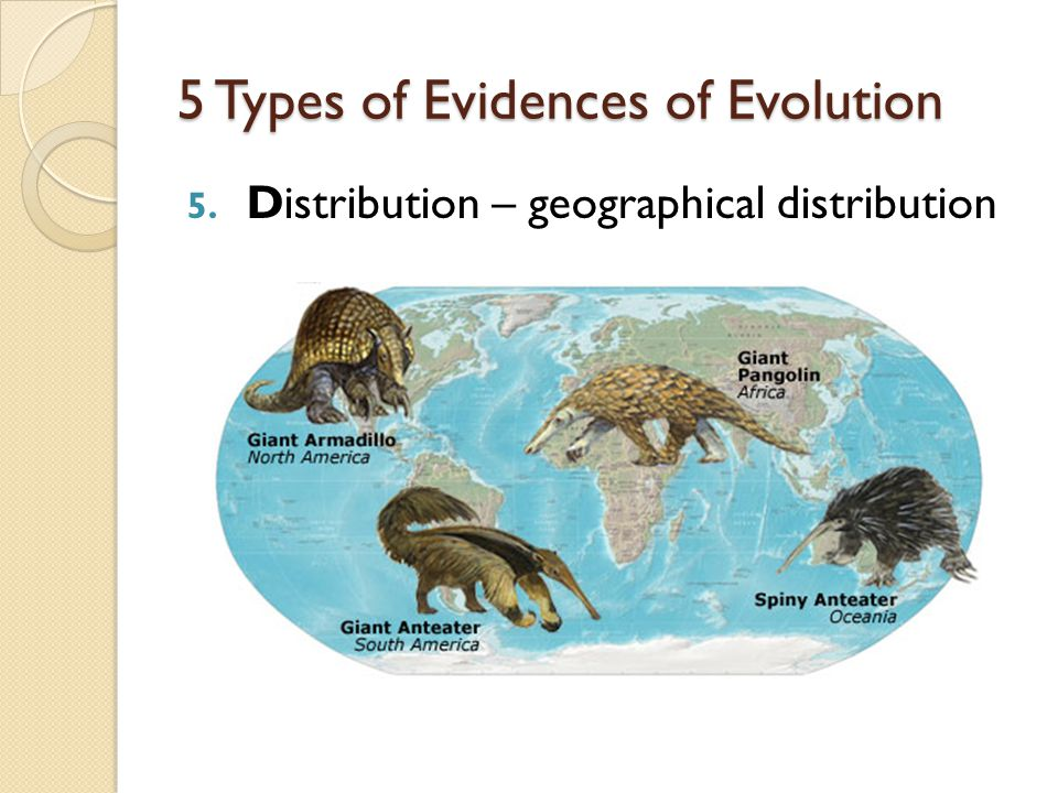 5 Types of Evidences of Evolution