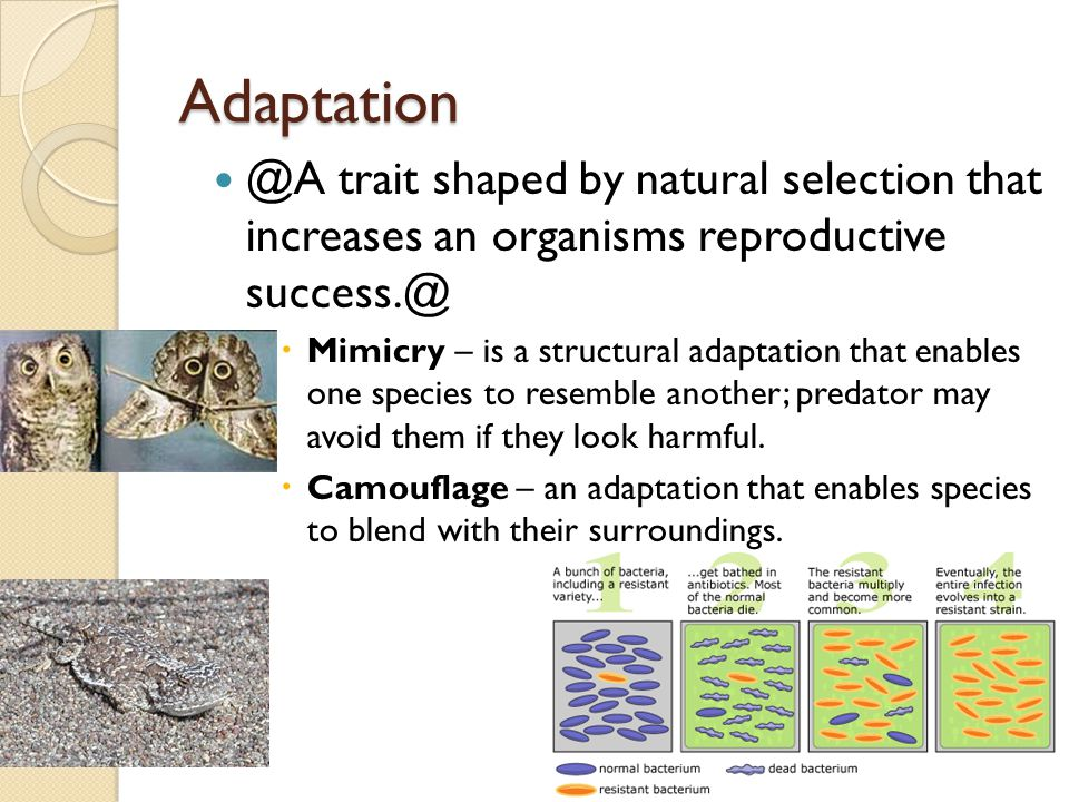 Adaptation @A trait shaped by natural selection that increases an organisms reproductive success.@