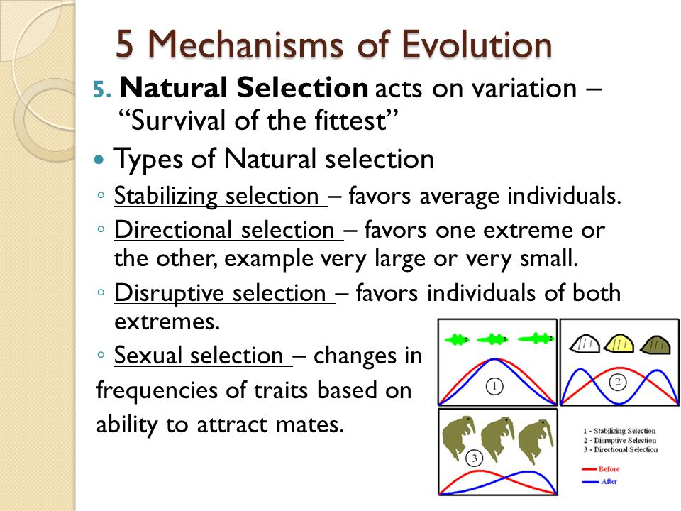 5 Mechanisms of Evolution