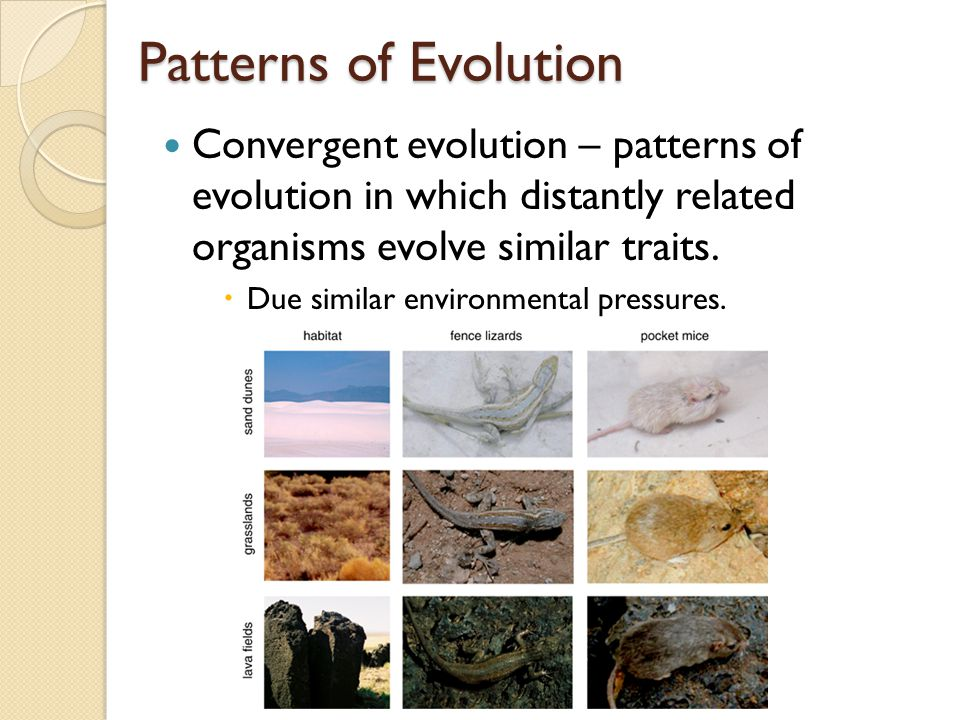 Patterns of Evolution Convergent evolution – patterns of evolution in which distantly related organisms evolve similar traits.