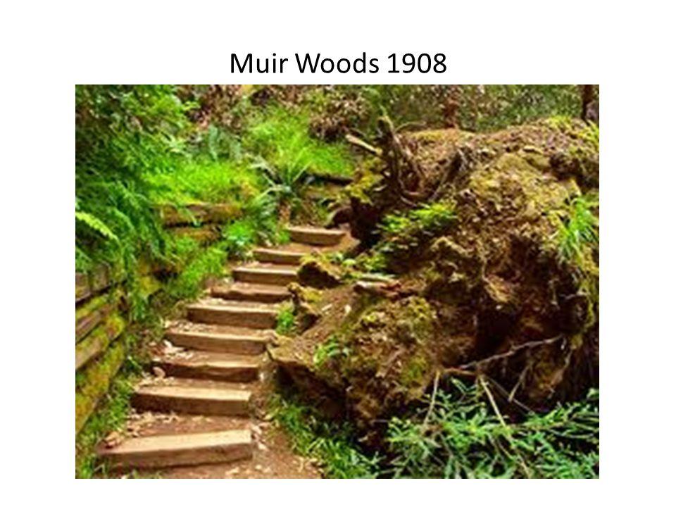 Muir Woods 1908