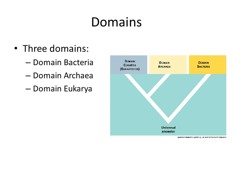 Domains Three domains: Domain Bacteria Domain Archaea Domain Eukarya