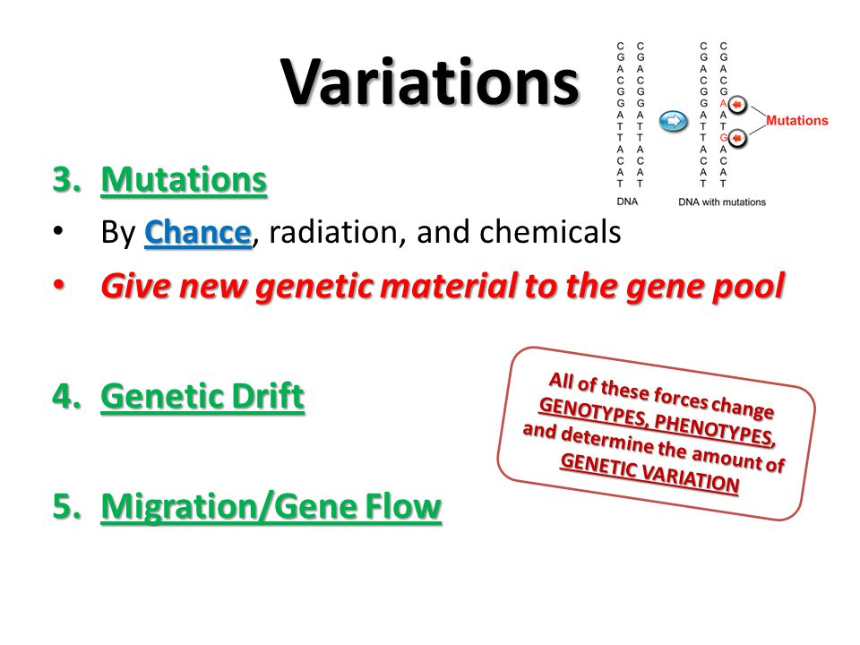 Variations Mutations Give new genetic material to the gene pool
