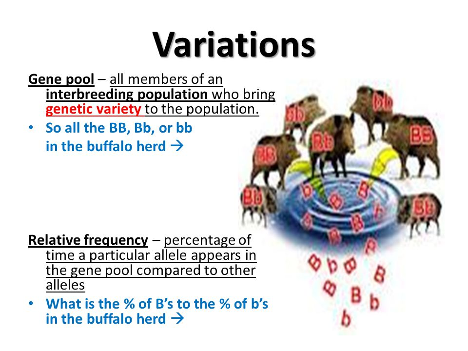 Variations Gene pool – all members of an interbreeding population who bring genetic variety to the population.