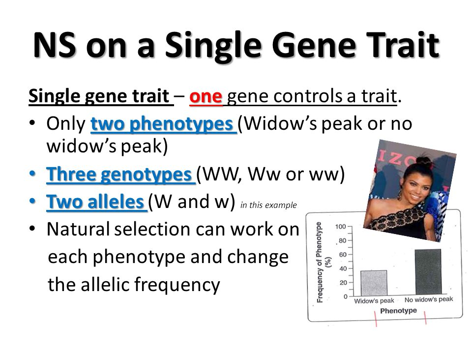 NS on a Single Gene Trait