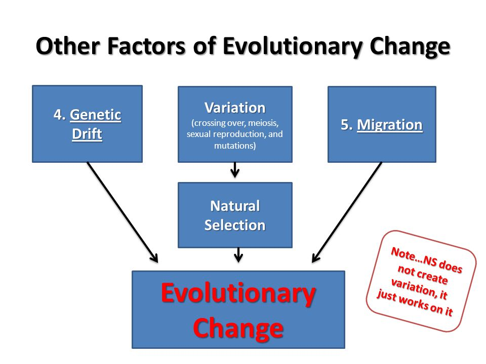 Other Factors of Evolutionary Change