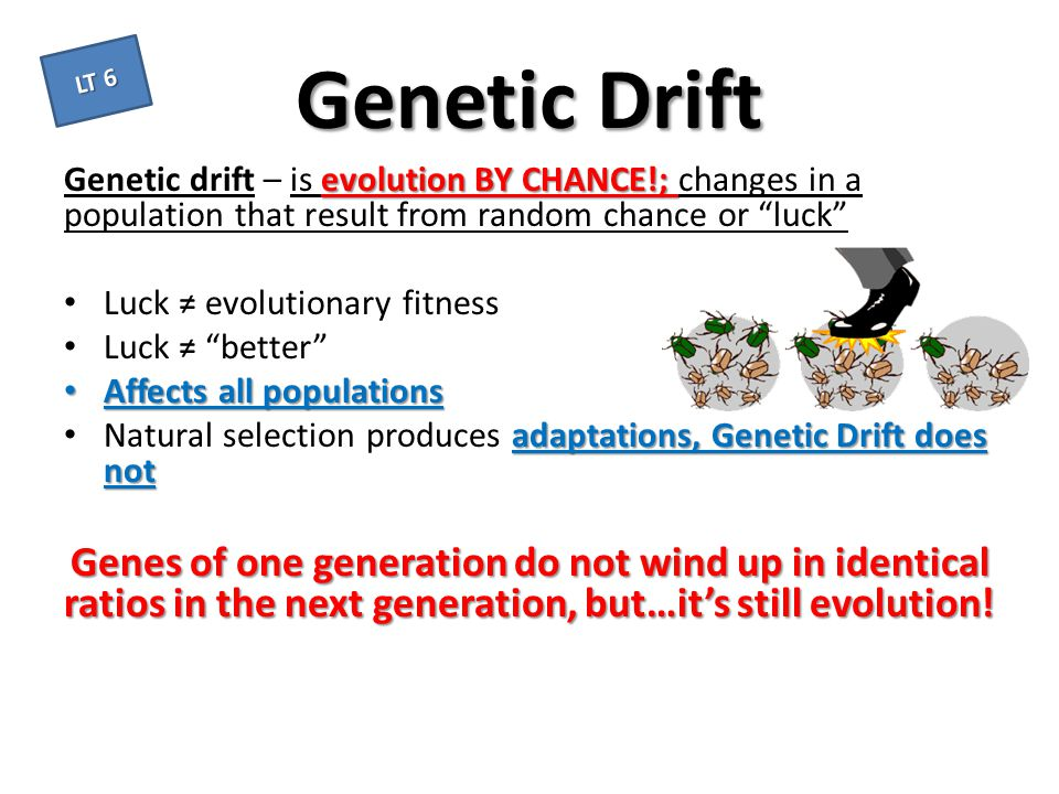 Genetic Drift LT 6. Genetic drift – is evolution BY CHANCE!; changes in a population that result from random chance or luck
